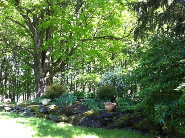 This is one of the most recent gardens, just outside the pottery studio, next to the oldest tree on the property, a venerable sugar maple