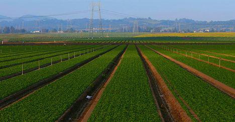 agriculture-impact-climate-change-monoculture-farm-photo