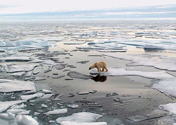 melting-polar-ice-caps