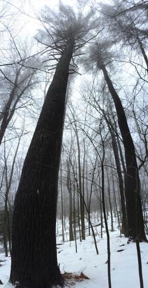 Tree spirits.  Photo c. J. Browdy 2014