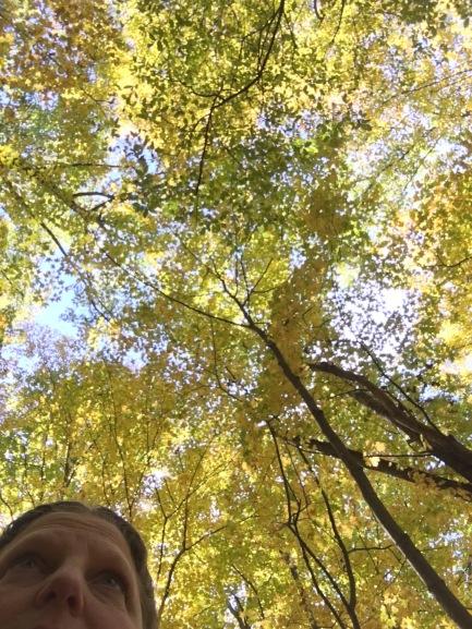 tree-copy