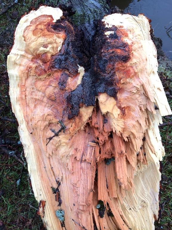 tree heart copy